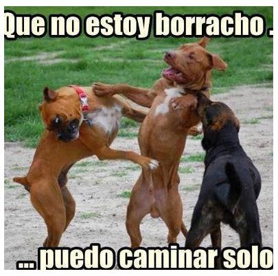 imagenes graciosas borrachos para facebook imagenes graciosas de animales para whatsapp im 225 genes