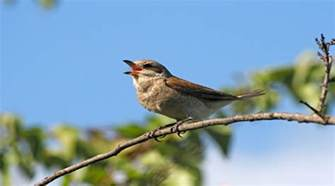 why do birds sing in the morning about family pets