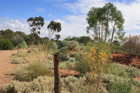 Arid Lands Botanic Gardens Australian Arid Lands Botanic Garden Adelaide By