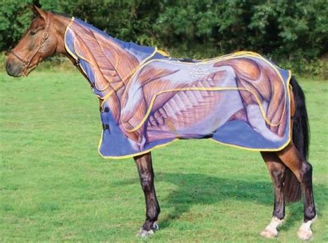 rugs for horses 17 best images about rugs on coats track records and cotton sheets