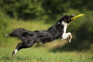 breeds for time owners 10 worst breeds for time owners top tips