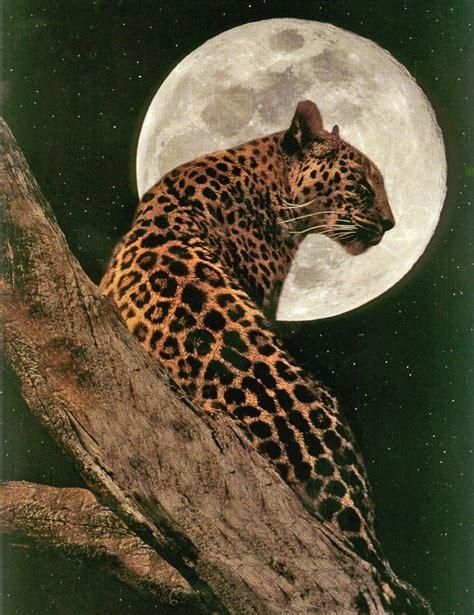 imagenes animadas de un jaguar el esp 237 ritu del jaguar la magia del alba