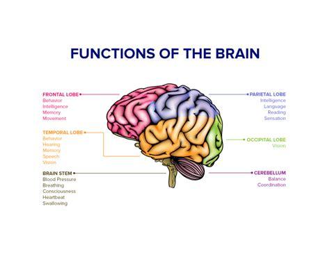 Brain Stress - stress your brain lifevantage us