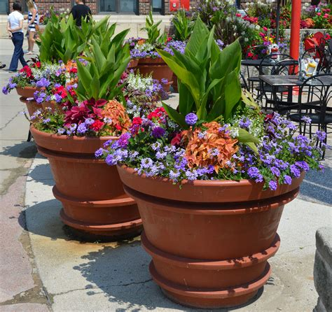 Large Container Gardening Ideas Large Containers Summer Annuals Sun Repetition Of Design Container Gardening