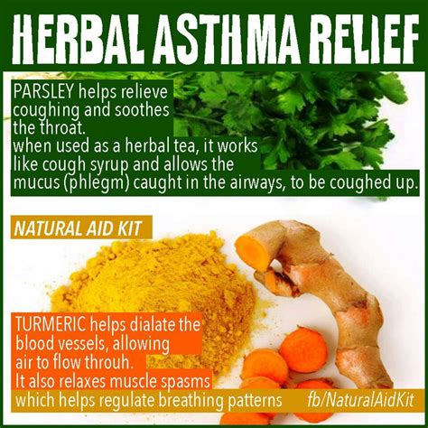 pin by warmables on allergies and asthma home remedies