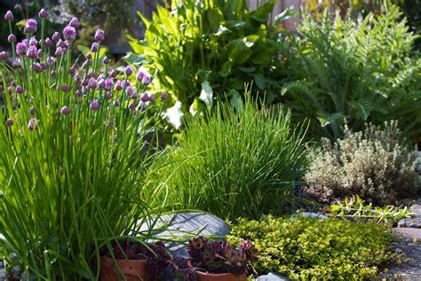 giardino erbe aromatiche agriturismo villa greggio casalserugo colli