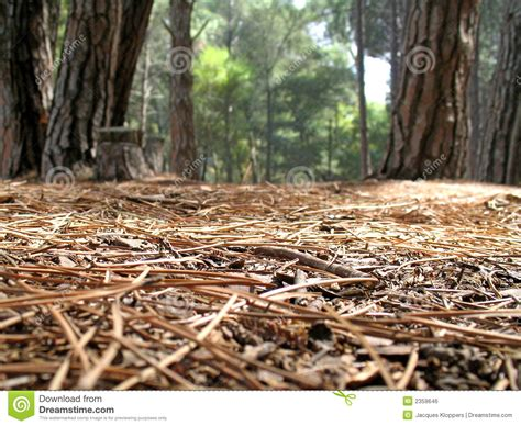 From The Forest Flooring view from the forest floor royalty free stock image
