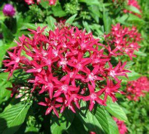jenis bunga  cocok  halaman rumah kamu