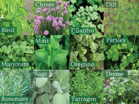 types of garden herbs 5 ideas to make your herb garden grow herbs garden
