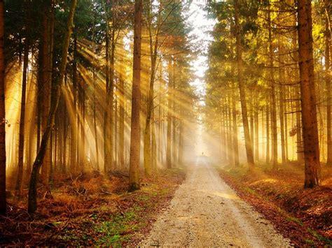 landscape sunset tree forest sunlight sunshine grass