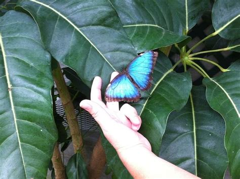 butterfly house sioux falls 1000 images about sioux falls sd on pinterest trips cathedrals and walk in