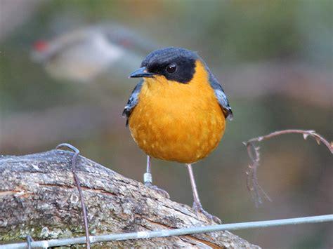 utah birders birding blog utah birds utah birding