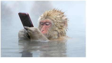 monkey in a bathtub monkey in a hot tub with iphone blank template imgflip