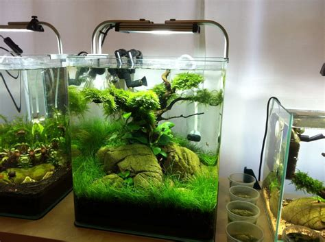 design aquarium nano 30 liter nano aquarium aquascaping pinterest the o