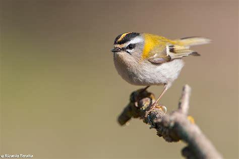 consultas y comentarios blog de ricardo ayala gordillo ricardo peralta fot 243 grafo de naturaleza aves de ribera
