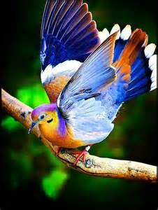 bright bird colorful creatures pinterest