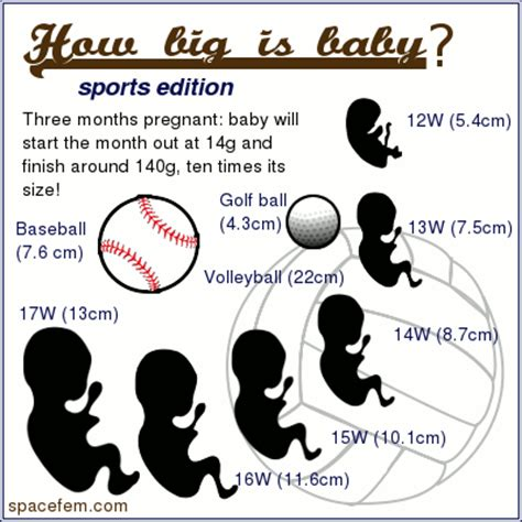 how big is a how big is baby sports edition