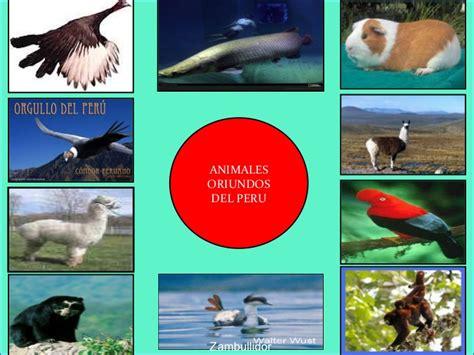 imagenes de animales nativos del peru la diversidad animales nativos