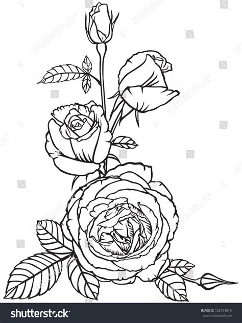 roses rose buds and ornate decorative bouquet flowers buds roses design stock vector