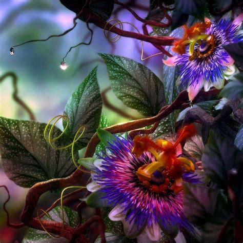 flower wallpaper cave exotic flower wallpapers wallpaper cave