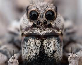 Image result for scary spider