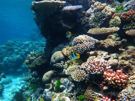 the the great barrier reef of australia its products and potentialities containing an account with copious coloured and photographic illustrations and coral reefs pearl and pearl shell bãªch books 10 facts about australia the facts