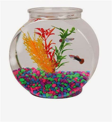 Decorative Fish Bowls by Cool Glass Fish Bowl Decorations Ideas And Tips