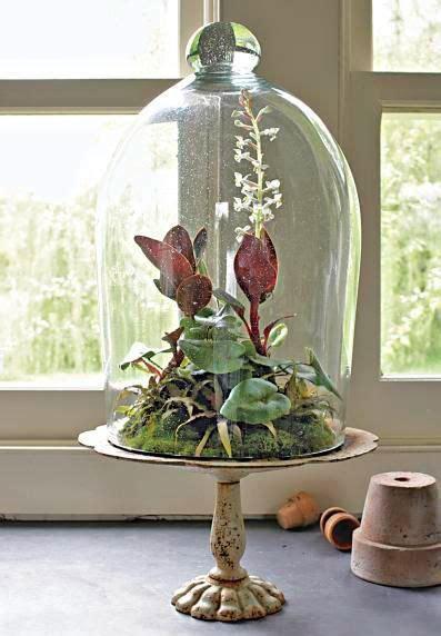 plant  beautiful terrarium plants orchid terrarium