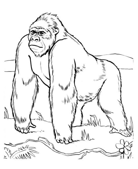 gorilla outline coloring page free coloring pages of g for gorilla