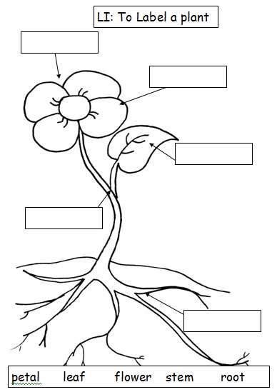 Plant Parts Worksheet by Esl Resources New Part 2 March 2012