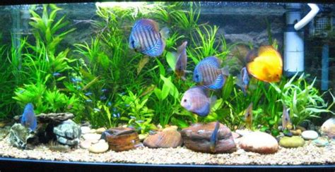 Colorful Fish Tanks General Tropical Fish Tanks Allow For Using More Colorful