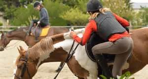 ab wann kann ein rüde decken ab wann kann ein pferd einreiten