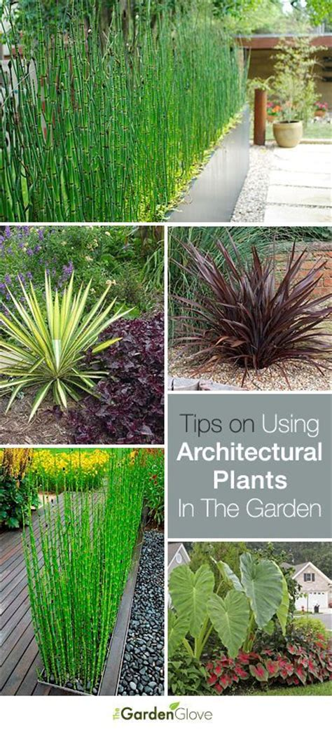 using architectural plants in the garden gardens flats