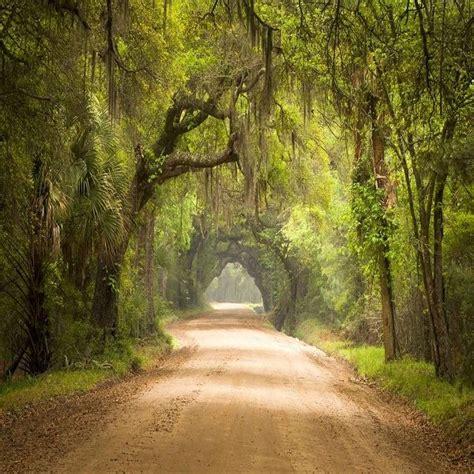 Botany Hours De 25 Bedste Id 233 Er Inden For Charleston South Carolina P 229