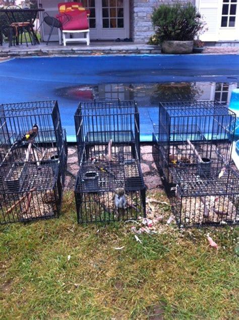 gabbie trappola le gabbie trappola per uccelli corriere it