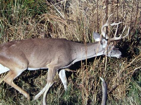 Looking For Deer Sheds by Hawk Publications S Journal