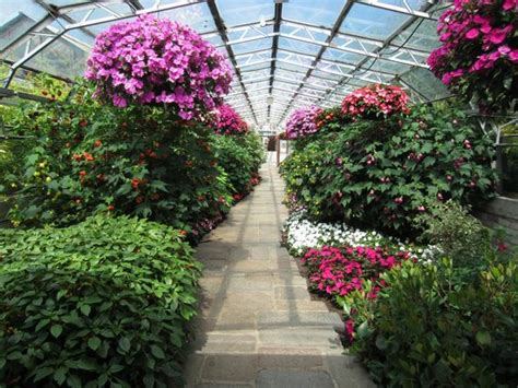 duthie park winter gardens guide to aberdeen outdoors travel guide on tripadvisor