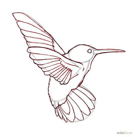 Hummingbird Outline by 17 Best Ideas About Hummingbird Drawing On Hummingbird Black Hummingbird
