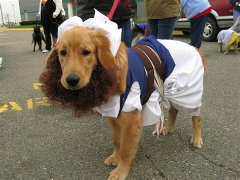 costumes for golden retrievers pictures of golden retrievers in costumes merry photo