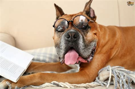 are cats or dogs smarter are dogs really smarter than cats pets4homes