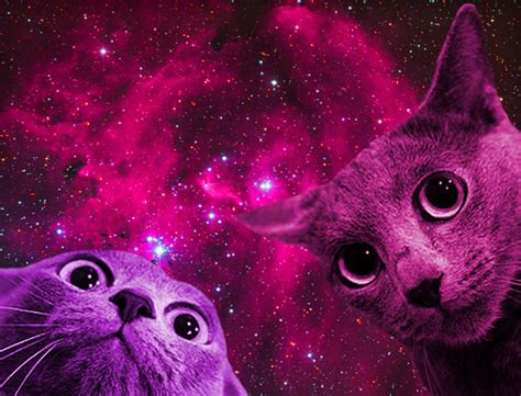 space cat wallpaper tumblr galaxy space cat pics about space