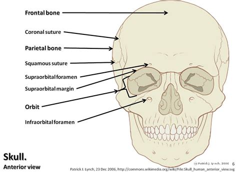 skull diagram skull diagram anterior view with labels part 1 axial sk