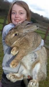 Unusual Rabbit Hutches 10 World S Biggest Creatures