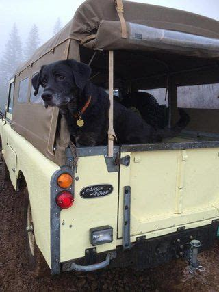 land rover setter dog 17 best images about land rovers and their animals on