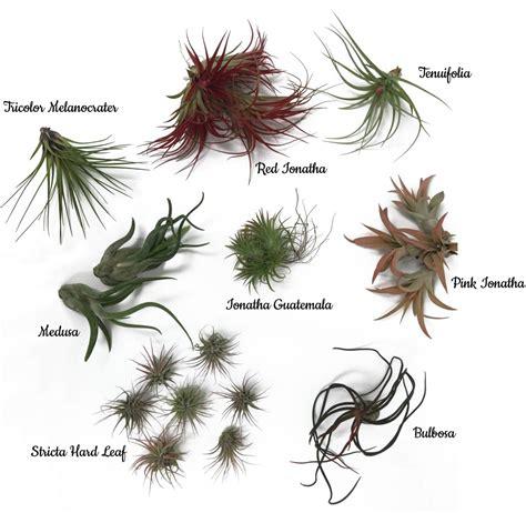 Types Of Garden Flowers - air plants archives freytags florist