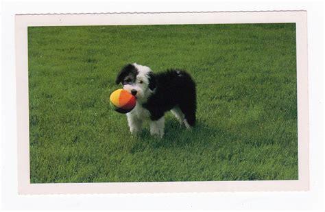 shore puppies postcard shore animal league port washington new york puppy jackie s
