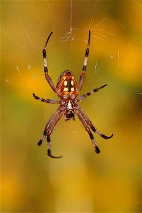 Garden Spider Totem Wolf Spider According To The Of Kentucky The