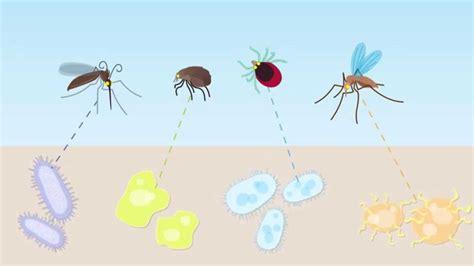 animation companion animal vector borne diseases youtube