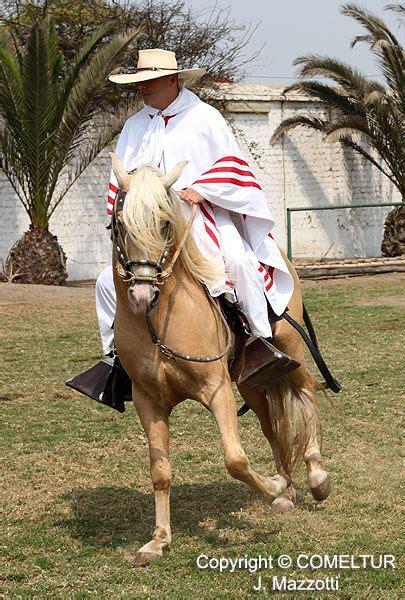 Peruvian Paso Horse And Marinera Dance | m 225 s de 1000 im 225 genes sobre peru en pinterest alpacas