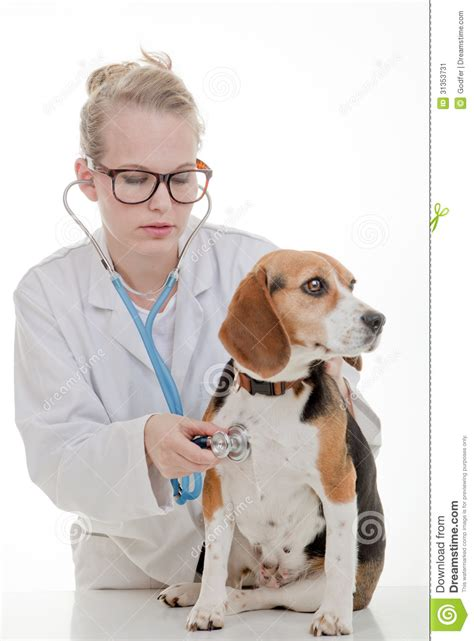 puppy vet veterinarian examining stock image image 31353731